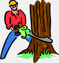 Palm Harbor Tree removal