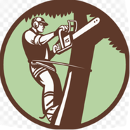 tree service palm harbor fl