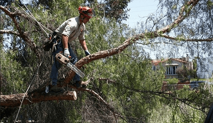 Tree Removal Service Near Me