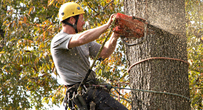 tree removal palm harbor